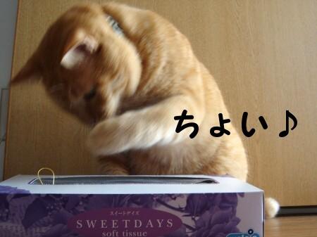 おもちゃのちょいちょいちょい♪ (3)