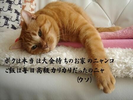 キミハドコカラヤッテキタ? (1)