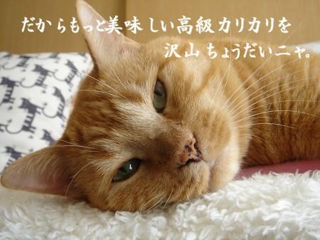 キミハドコカラヤッテキタ? (2)