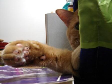 疲れた時は猫る (1)