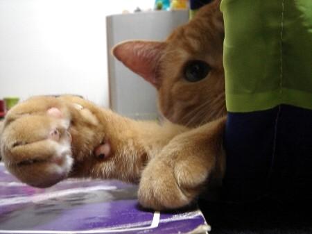 疲れた時は猫る (2)