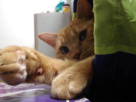 疲れた時は猫る (3)