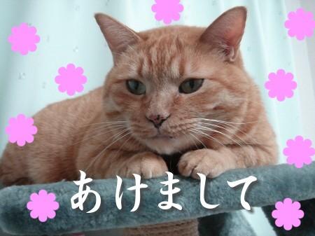 新年にょご挨拶 (1)