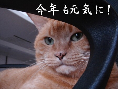 新年にょご挨拶 (3)