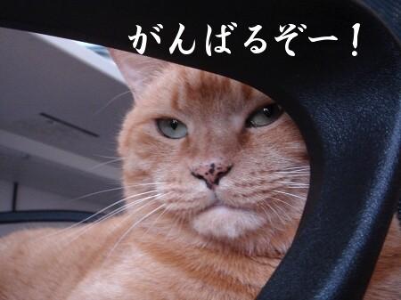 新年にょご挨拶 (4)