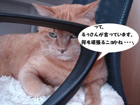 新年にょご挨拶 (5)