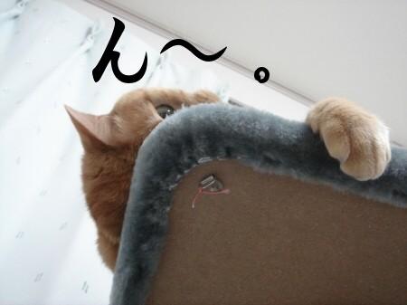 猫にお年玉 (1)