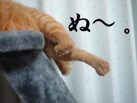 猫にお年玉 (2)