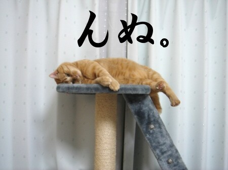 猫にお年玉 (3)