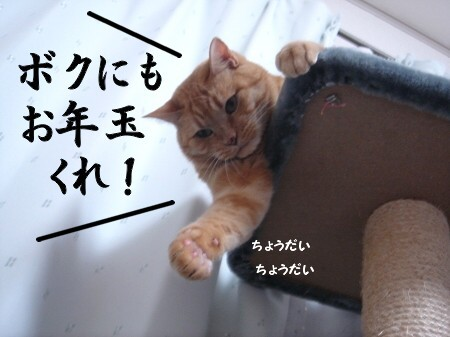 猫にお年玉 (4)