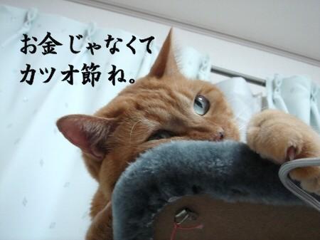 猫にお年玉