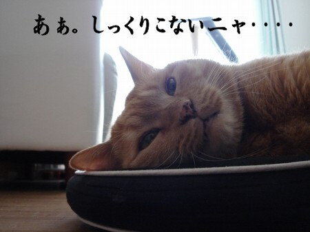 猫寝心地の悪い座布団 (1)