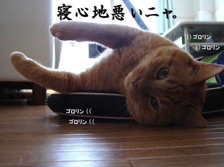 猫寝心地の悪い座布団 (2)