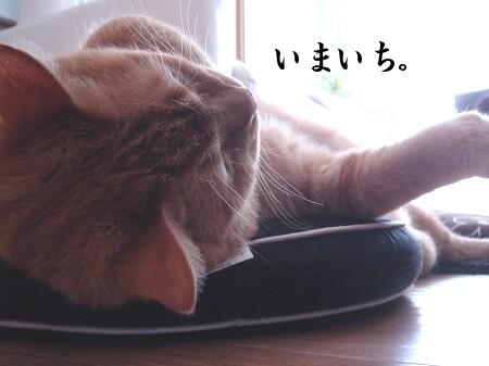 猫寝心地の悪い座布団 (5)