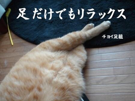 猫寝心地の悪い座布団 (6)