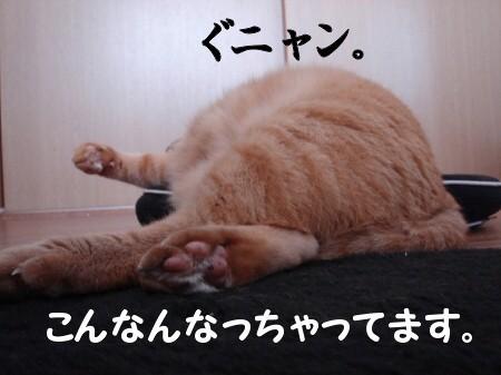 猫寝心地の悪い座布団