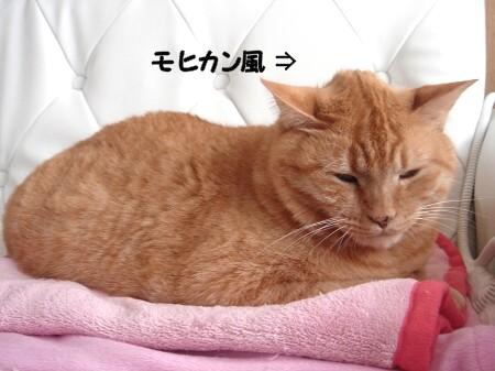 みぞれまじりの雨とソフモヒ (1)