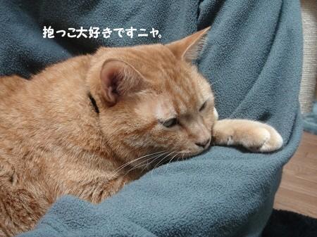 みぞれまじりの雨とソフモヒ (3)