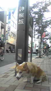 kaguratsuku.jpg