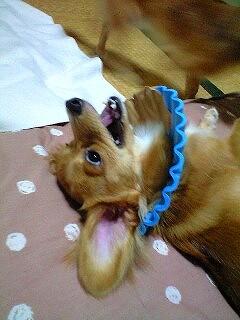 A08.9.10.11.kara-で笑うリズ 001