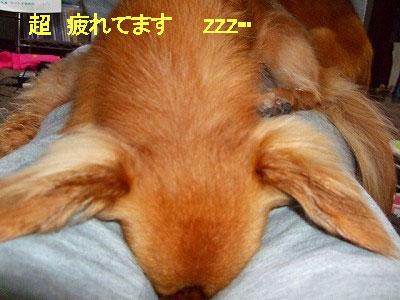 A09.03.28-リズム疲れてます-@