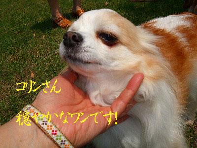 A09.05.01亀崎港公園コリン-0