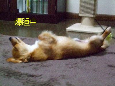A09.05.16.爆睡中ppp
