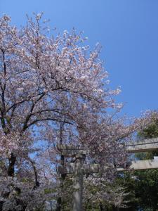 haruurara3.jpg