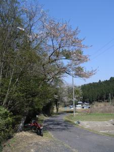 haruurara4.jpg