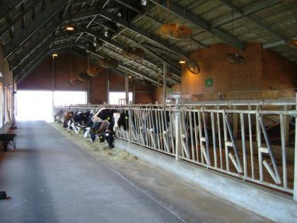 阿蘇 ミルク牧場 ハートのマークのある 牛