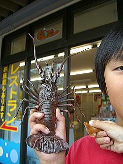 浅虫水族館レストラン 13