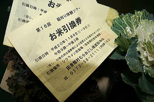 シクラメン祭り (2)