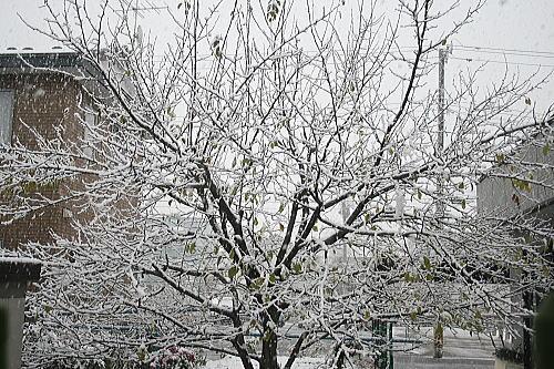 雪景色2008