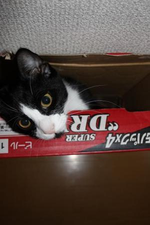 箱が好き♪2
