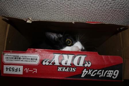 箱が好き♪1