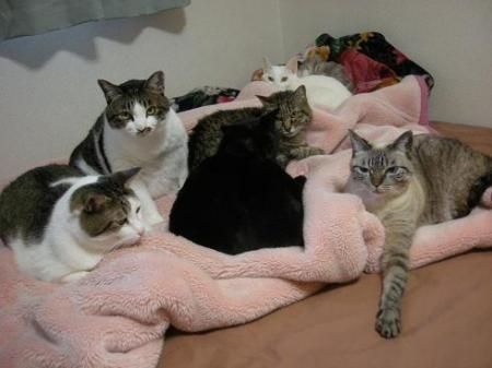 ベッドに集合~