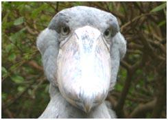 p-stork-02.jpg