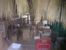 陰干しの米を猿から守る・猛犬クマ(上田さん愛犬)