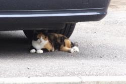 猫ねこネコ