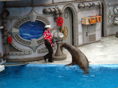 Sea lion show 1