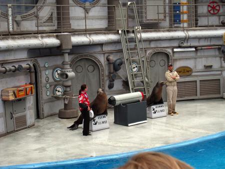 Sea lion show 2