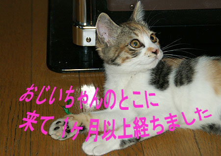 200912508332 (3)