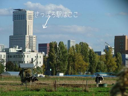DSCF8503.jpg