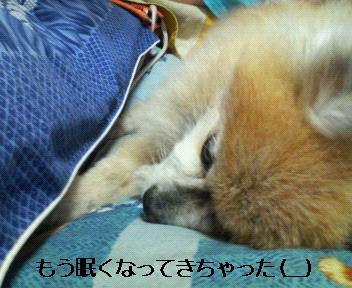 もう、眠いよ~・・・