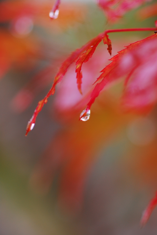だけど私、泣いたりなんかしな~い、涙は雨のせいよ♪