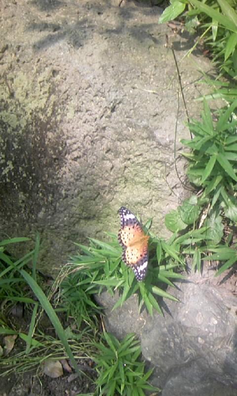 090614_100341蝶