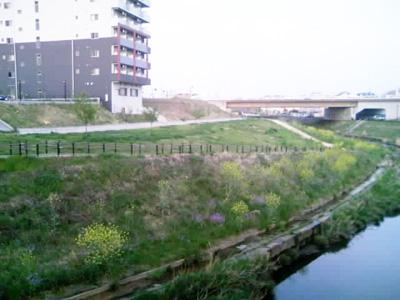 kuma6.jpg