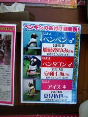 ペンギン紹介1