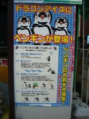 ペンギン紹介