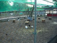 44ウサギ